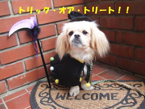 PA276028_convert_20121030135442.jpg