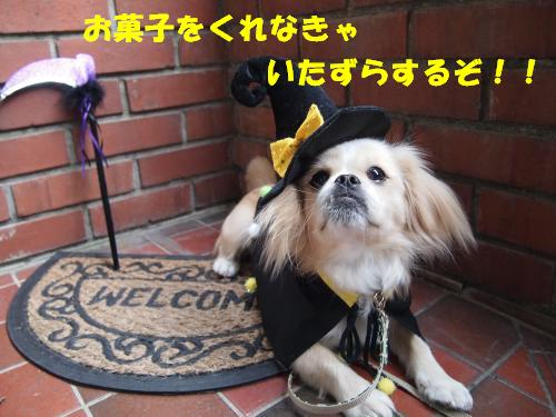 PA276034_convert_20121030135520.jpg