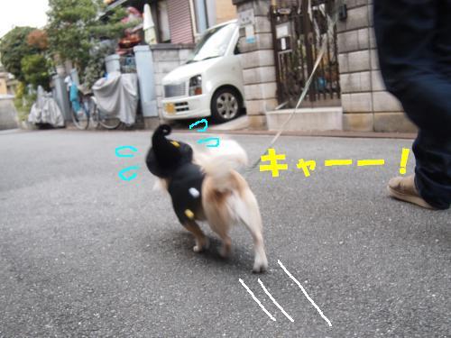 PA276109_convert_20121030135607.jpg