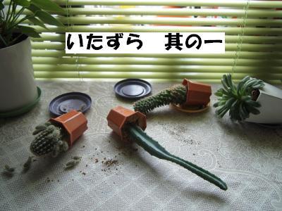 PA306108_convert_20121030135734.jpg