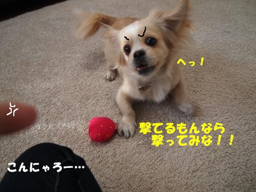 PC137697_convert_20121213160719.jpg