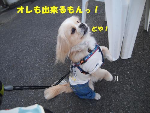 PC167793_convert_20121216215156.jpg