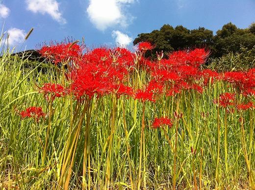 s-201209福岡&武雄温泉 061