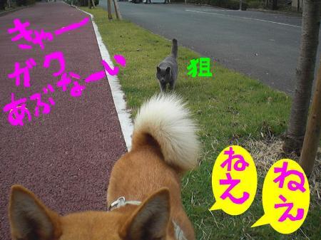 ne3_20121026010603.jpg