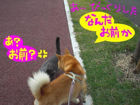 ne4_20121026010614.jpg