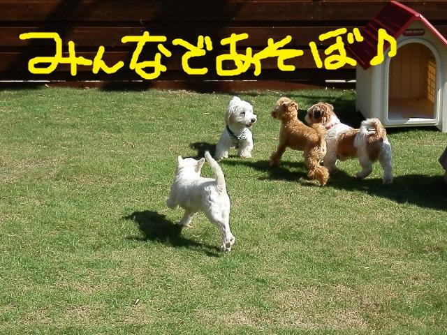 ASOBO_20121011212347.jpg