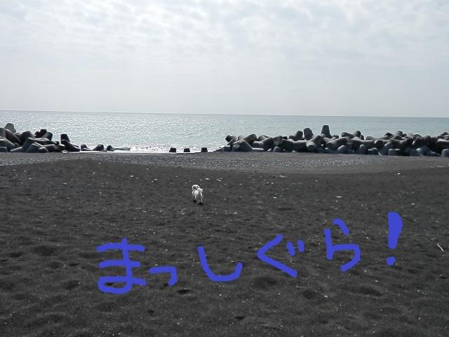 P31505271.jpg