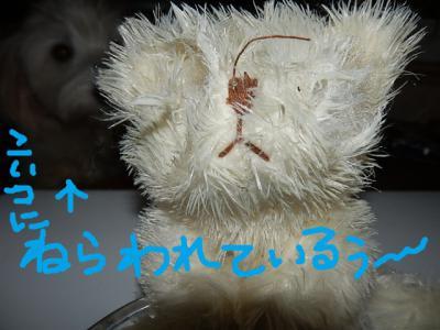 PA165919_20121018005633.jpg