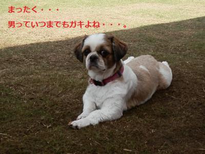 PA296382_20121030004921.jpg
