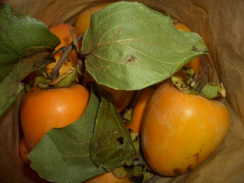 500渋柿