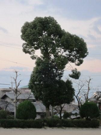 スヌーピーの木