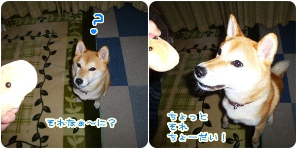24-11-11-2.jpg