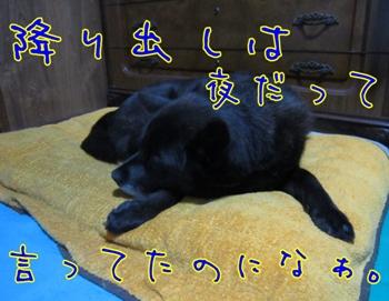 IMG_2727.jpg