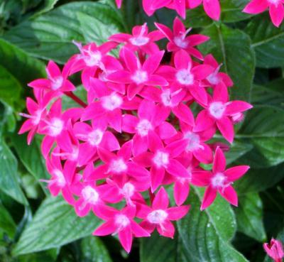 141125-散歩道の花-6