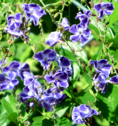 141126-散歩道の花①-6