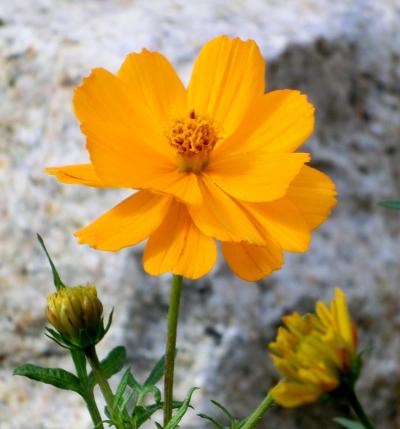 141126-散歩道の花①-2