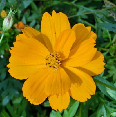 141126-散歩道の花①-3