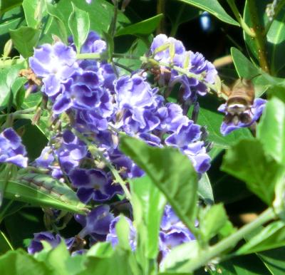 141126-散歩道の花①-5