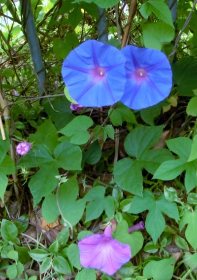 141204-散歩道の花①-6