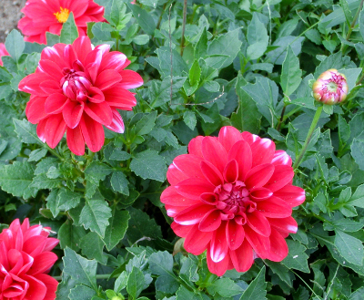 141204-散歩道の花①-3