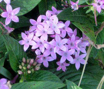 141204-散歩道の花①-4