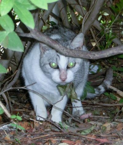 141204-野良猫さん-3