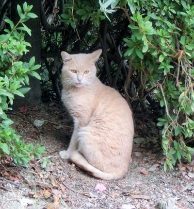 141204-野良猫さん-1