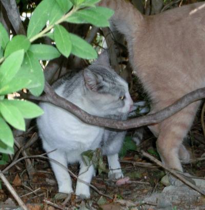141204-野良猫さん-2