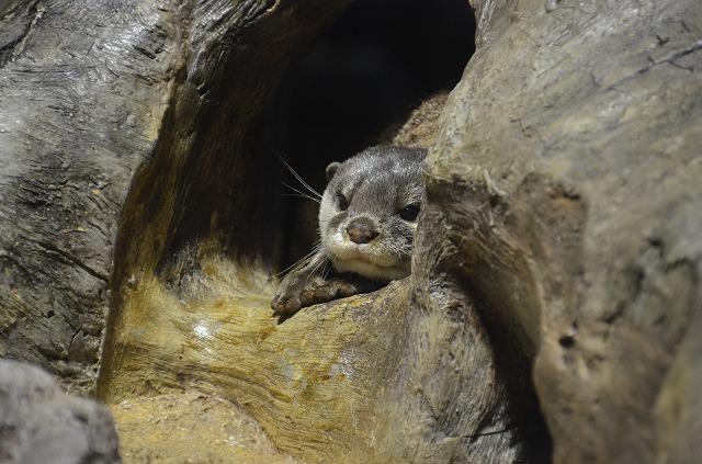 Otter01