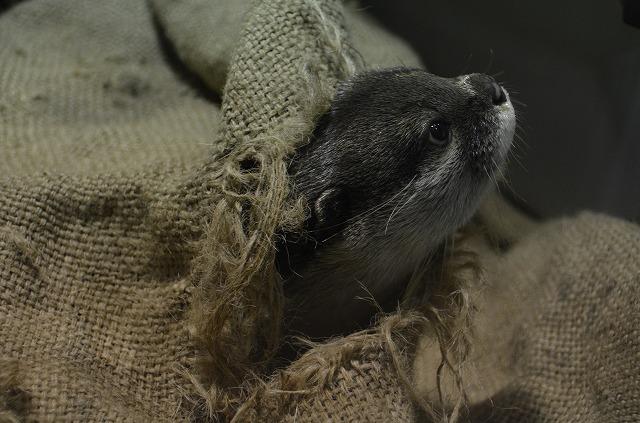 Otter04