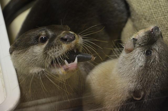 Otter05