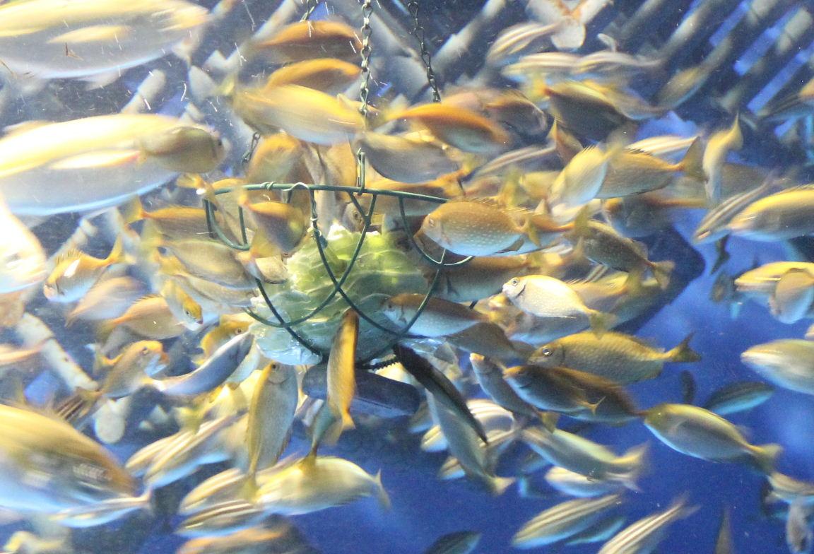 魚とキャベツ