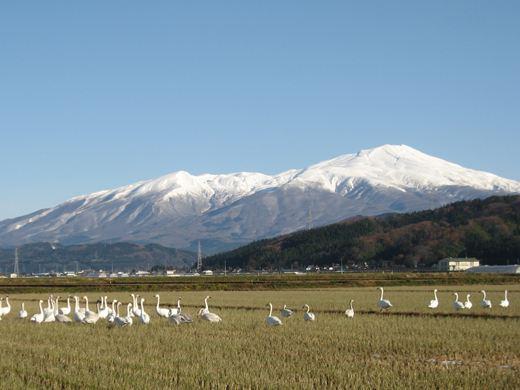 20121204001.jpg