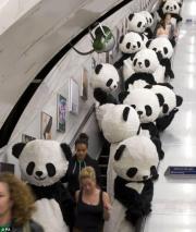 panda_convert_20120709004533.jpg
