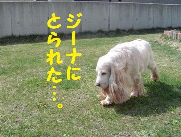 DSC09678_20120421114017.jpg