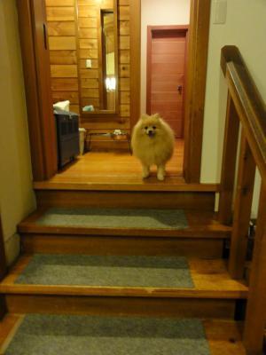 階段はわんこ仕様