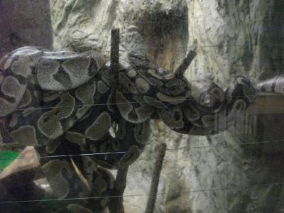 今年の顔であるヘビ