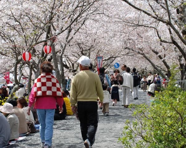 DSC_0009 桜