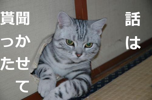 hanashihakikasetemoratta.jpg