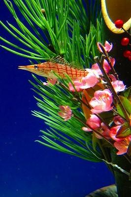 沼津港深海水族館の正月アレンジ
