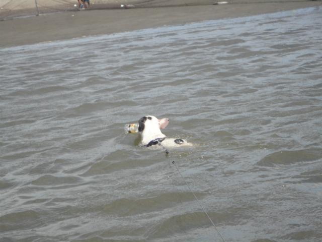 006泳いでるかも