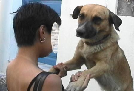 サントリーニ チンチン犬との再会