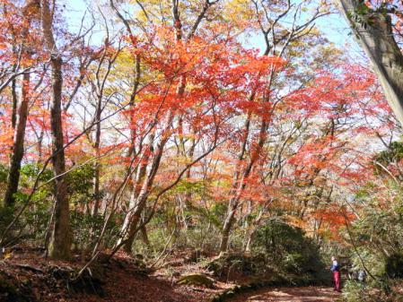 箱根散策道の紅葉 1