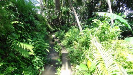 ウブド田園地帯の散策(細い道)