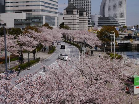 桜木町からさくら通り