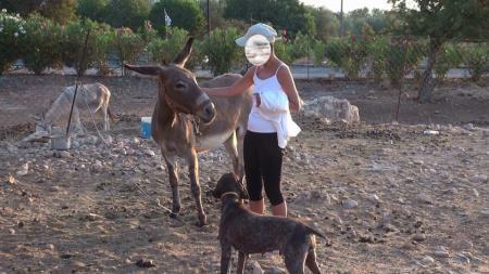 ロードス ロバと犬