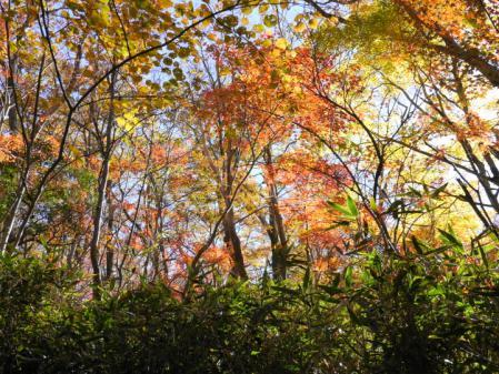 箱根散策道の紅葉 2