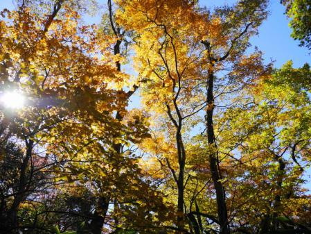 箱根散策道の紅葉 3