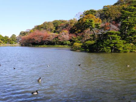 三溪園 大池