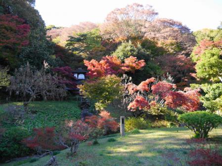 三溪園 紅葉 1